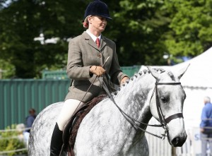 Horse being ridden in the show ring