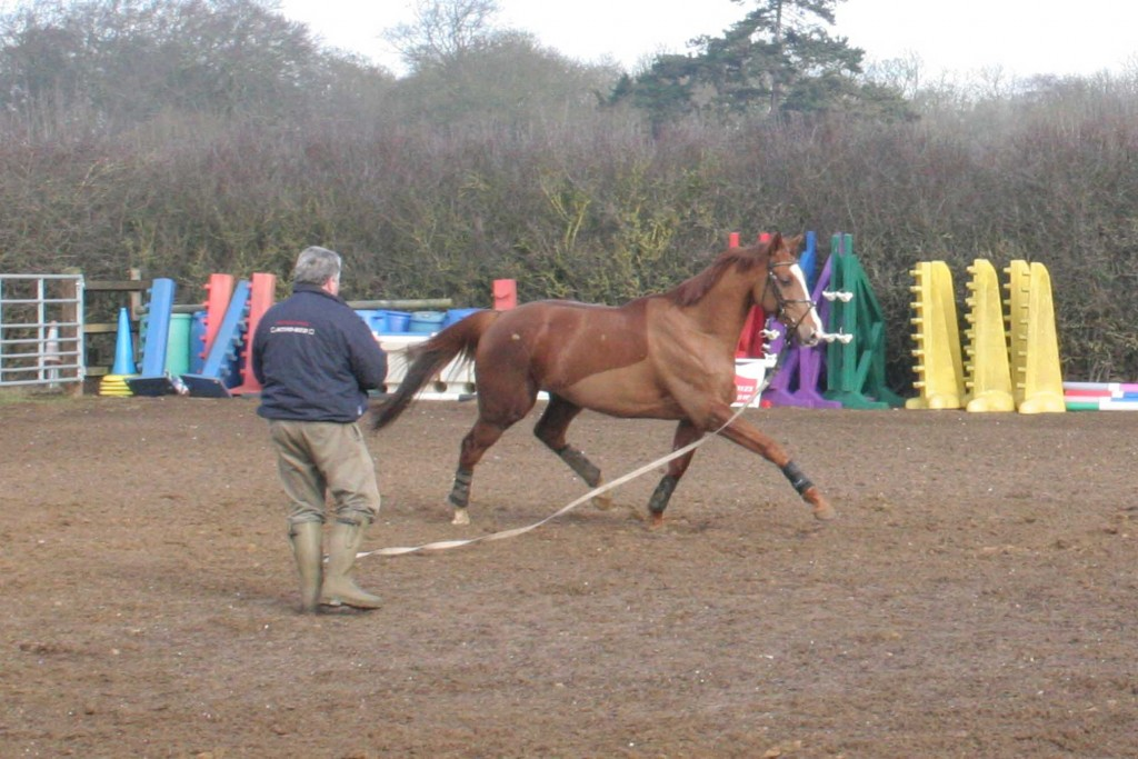 Note Fred's stance – an easy hold of the lunge line and positioned mid-way along the horse's length so that he can keep forward momentum and readily move towards to the shoulder to steady the horse or stop him turning in, or further towards to quarters if the horse tries to drop back. Even with a loose lunge line control can still be maintained by your body positioning and language. Do not worry at this stage how the horse is positioning his body, it is control you are after - refinement can come later on.