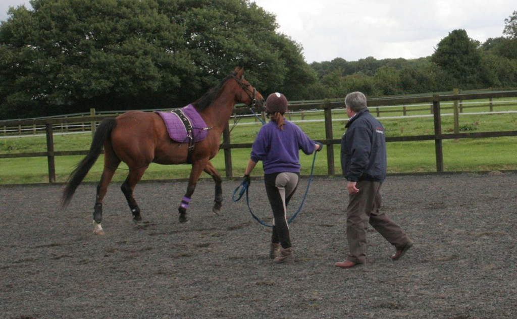 Fred guides a young student in the art of lunge work. Here he demonstrates encouraging the horse to move forward without the use of a lunge whip by offering his hand and positioning himself behind the horse's mid-line.